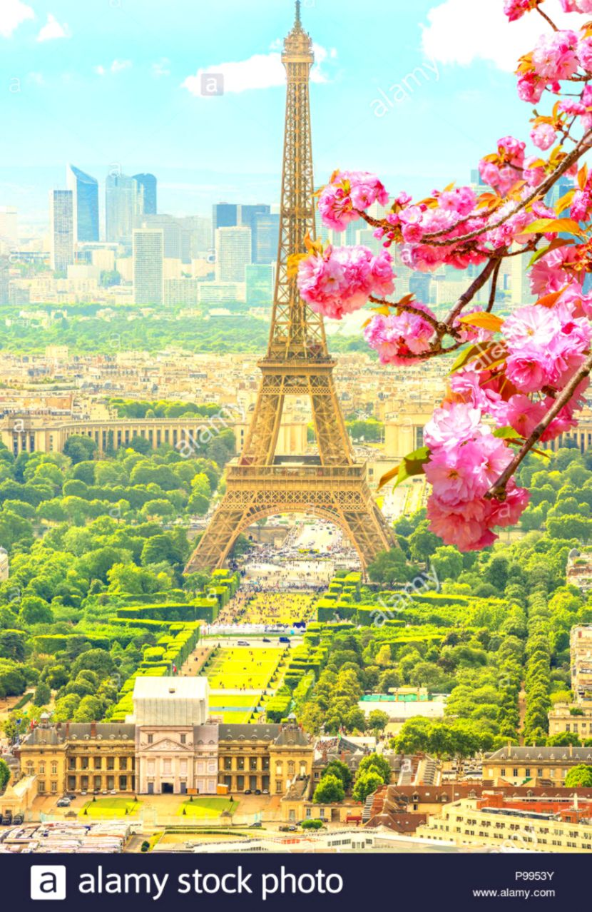 Cherry blossom branch in foreground and cityscape skyline of Paris