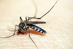 Alasan Kenapa Gigitan Nyamuk Terasa Gatal?