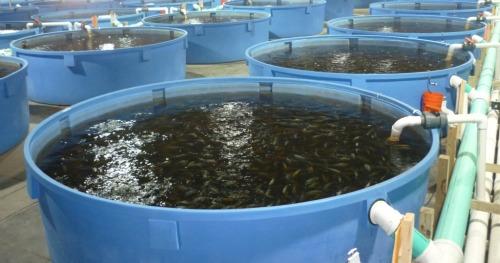 Jenis Jenis Wadah Budidaya Ikan
