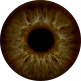 Eyes PNG | Eyeball PNG Images in HD Free Download