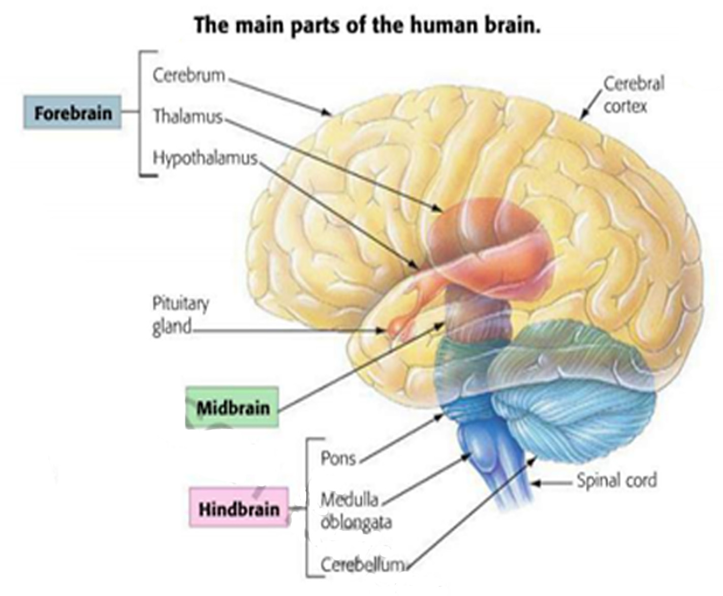 Snippd: The Central Nervous System