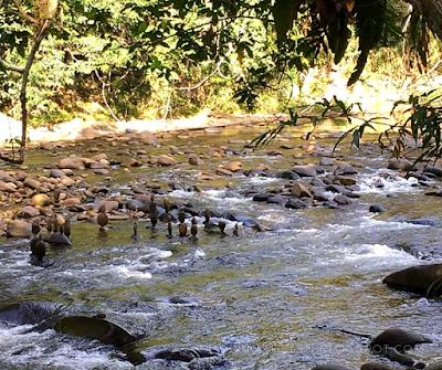 TRIP TO MANDALIPAU WHITE WATER, PAPAR, SABAH | WINICHELEN