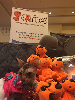 Coco, the Cornish Rex, ignoring the dogs at the 4Knines booth at BlogPaws