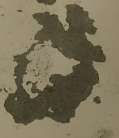 This stain looks like a fire breathing dragon
