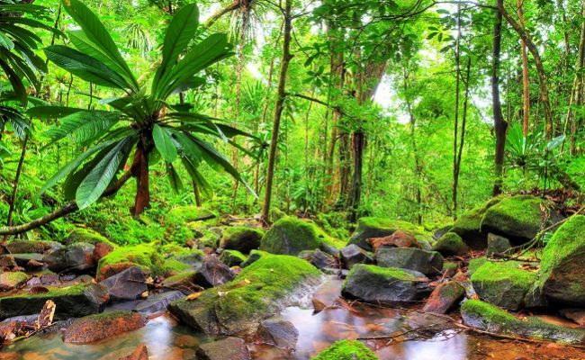 Xvlor.com Zahamena National Park