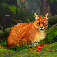 Bigescapegames Big African Golden Cat Escape