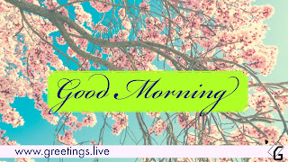Free Good Morning greeting HD Picture Messages.