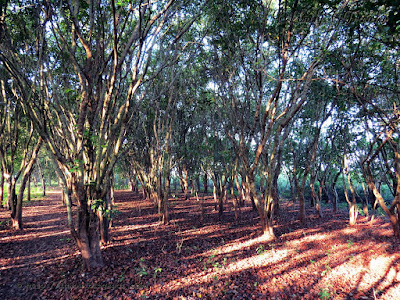 Baikka beel - Srimangal