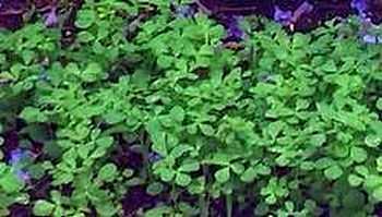 Growing Herbs Herb Garden Ideas
