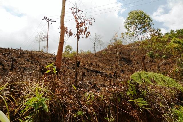 Kebiasaan Membakar Hutan by Marsel Gunas
