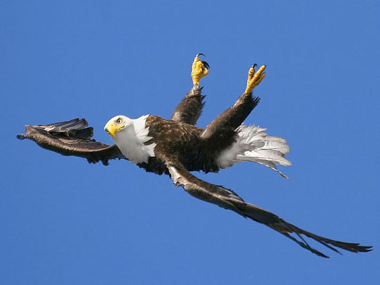 nothing to see here. just an eagle flying upside down.