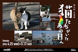 https://kiryu-catstory.blogspot.jp/2018/03/blog-post_29.html