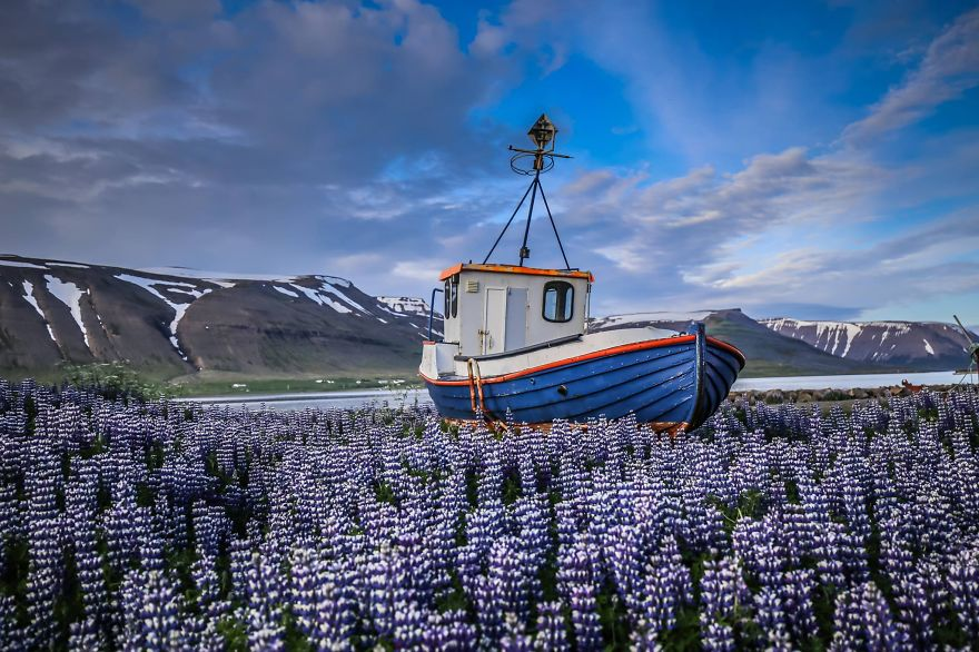 And mesmerizing fields of lupins in Iceland - We Visited Over 50 Countries With Our Van Spending Only $8 A Day