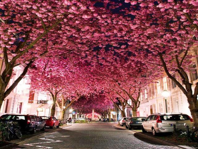 Bonn, Jerman
