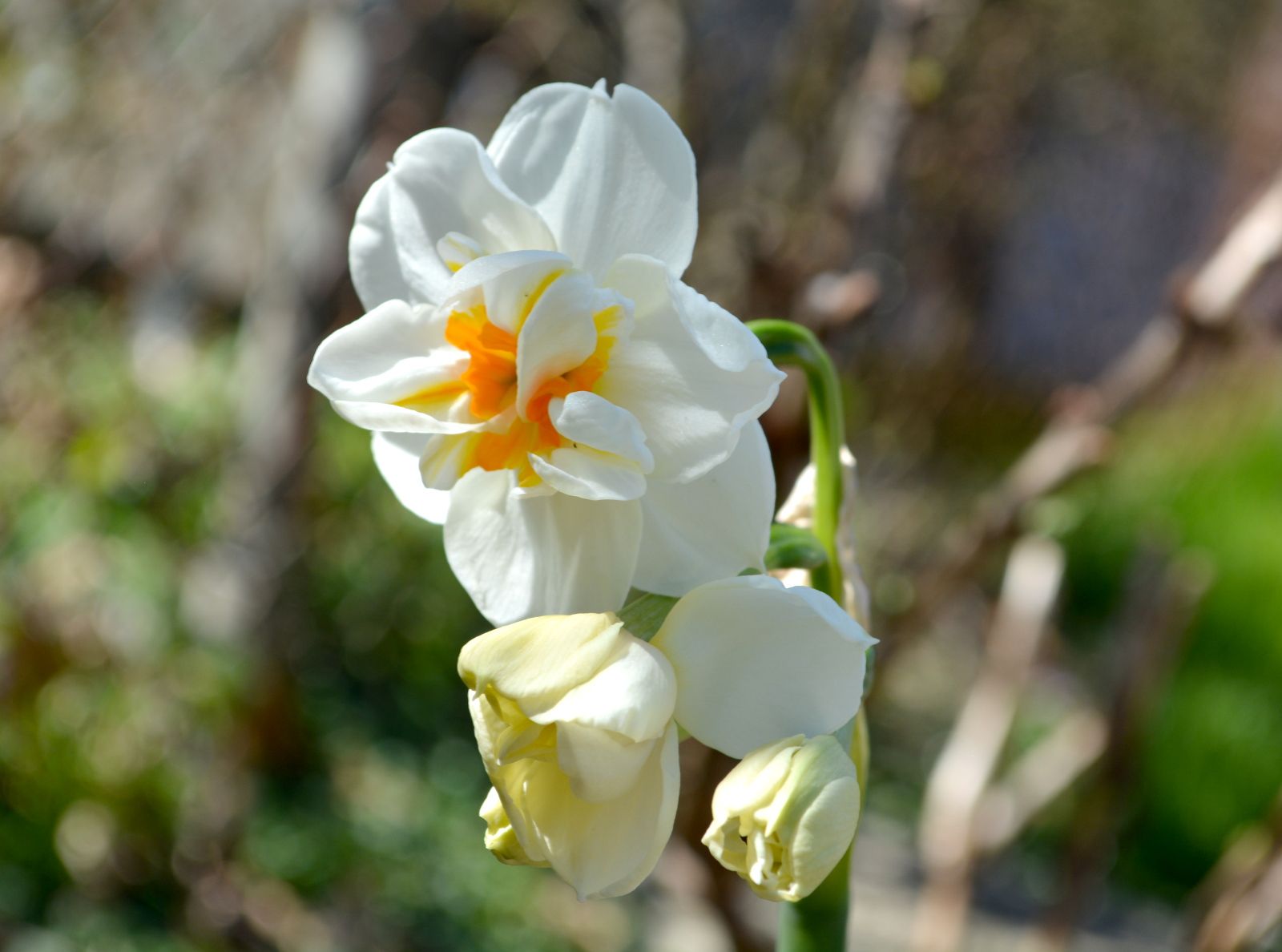 cozy birdhouse | daffodils