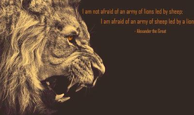 Lion Alexan