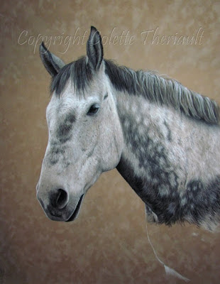 Horse portrait painting in progress by Canadian Artist Colette Theriault