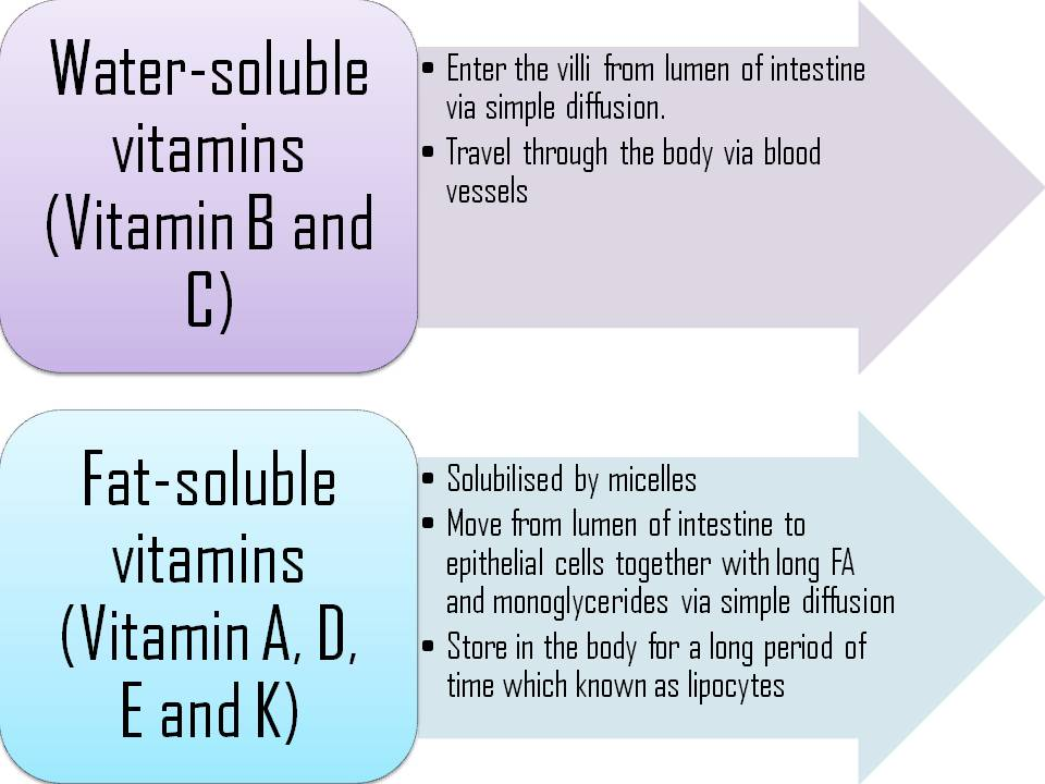 An overview of water soluble vitamins and its biological use