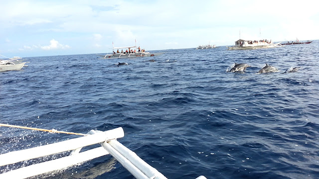 Dolphin Watching at Balicasag Island, Bohol