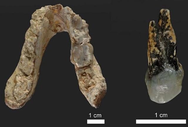 Ungkap Kebiasaan Merokok Manusia Purba dari Teliti Plak Gigi