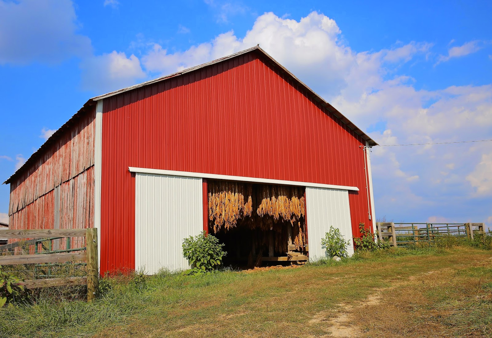 Sweet Southern Days Old Kentucky Tobacco Barns