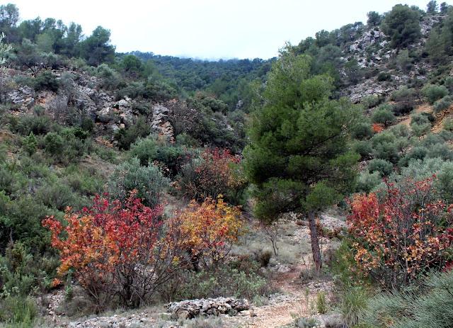 Bosque mediterráneo en Ayna