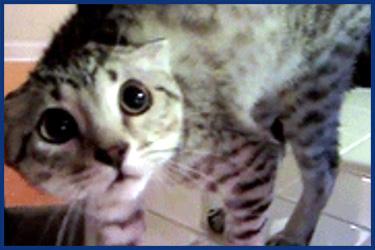 Lustige Katzen Videos 2017
