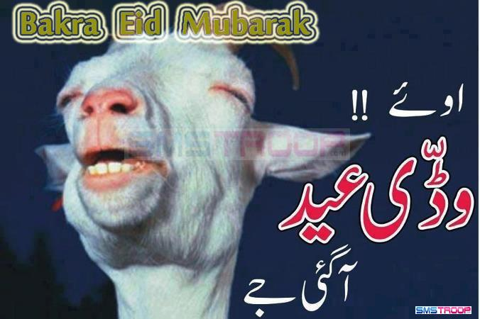 Watch Eid-al-Adha Videos - Eid-ul-Azha Cow Camel and Bakra Qurbani