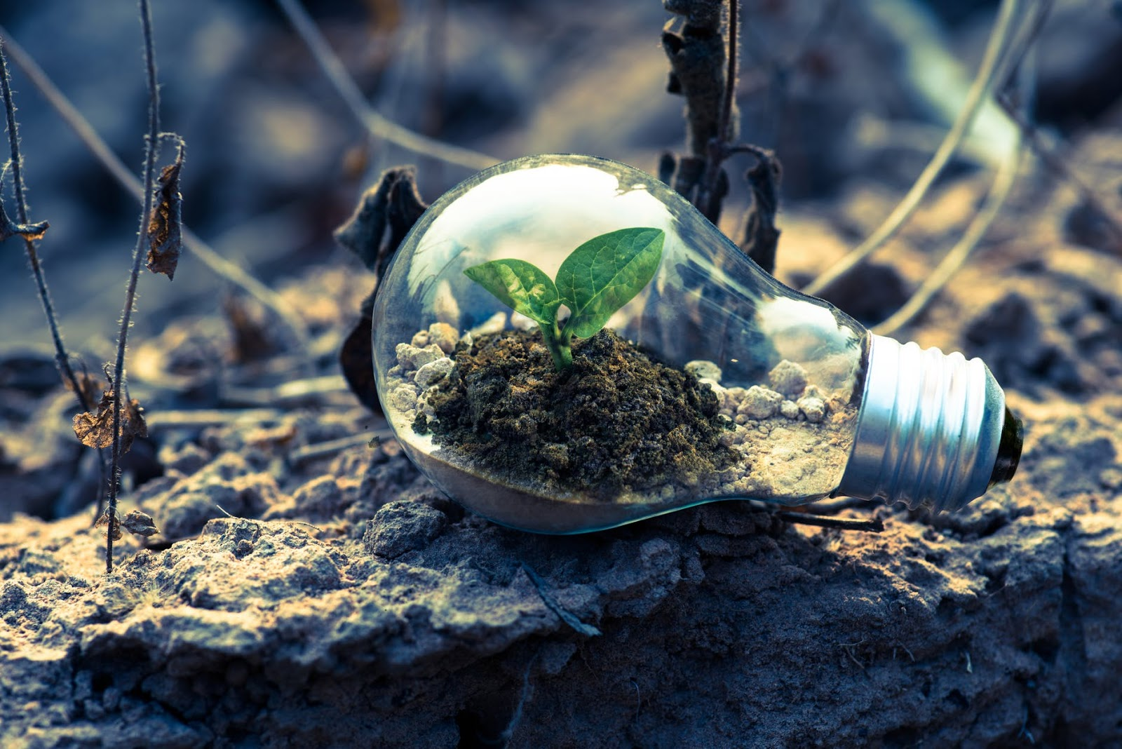 a plant growing inside an old lightbulb to symbolise an eco friendly home