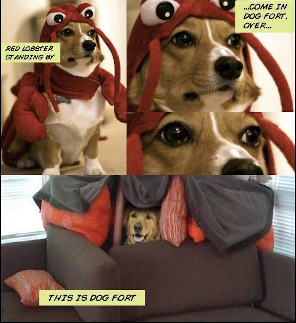 Red lobster requesting dog fort
