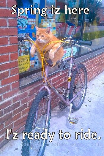 biker car is ready for spring - cat excited to ride bike - funny photo