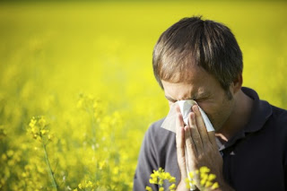 Why do we get a pollen allergy?