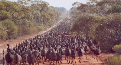 Perang-Emu-Perang-Yang-Konyol