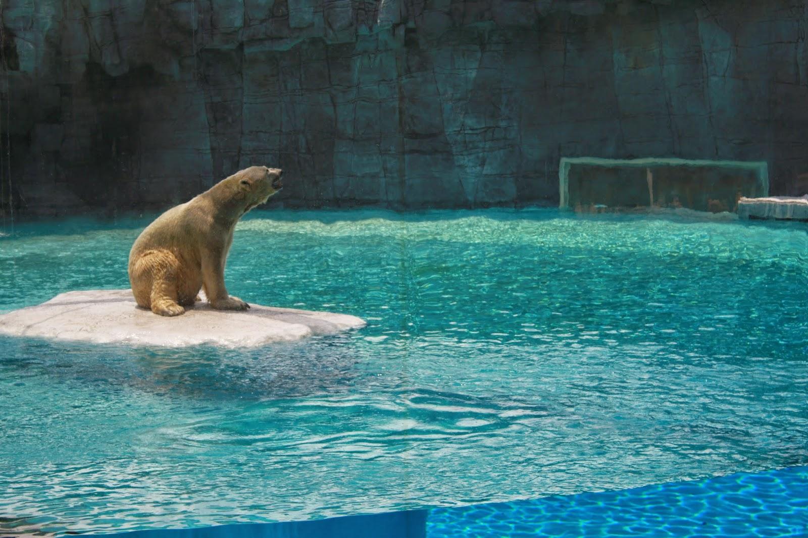 oso_polar_zoo_singapur