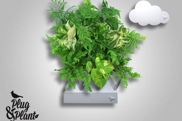數位時代翻攝自 Plug and Plant Facebook 粉絲頁