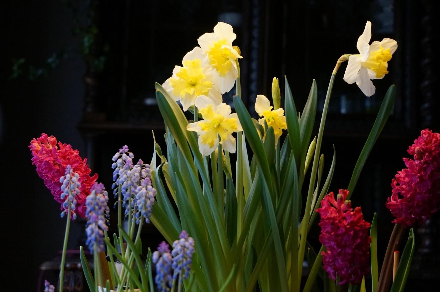 Che Cosa Sono I Bulbi voglia di primavera coi bulbi !   blossom zine blog