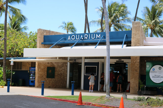 Best Family Activities in Honolulu Hawaii - Waikiki Aquarium and Honolulu Zoo