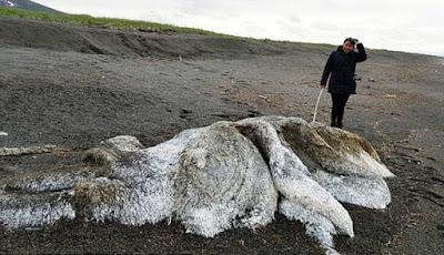 Monster misterius berbulu di tepi pantai