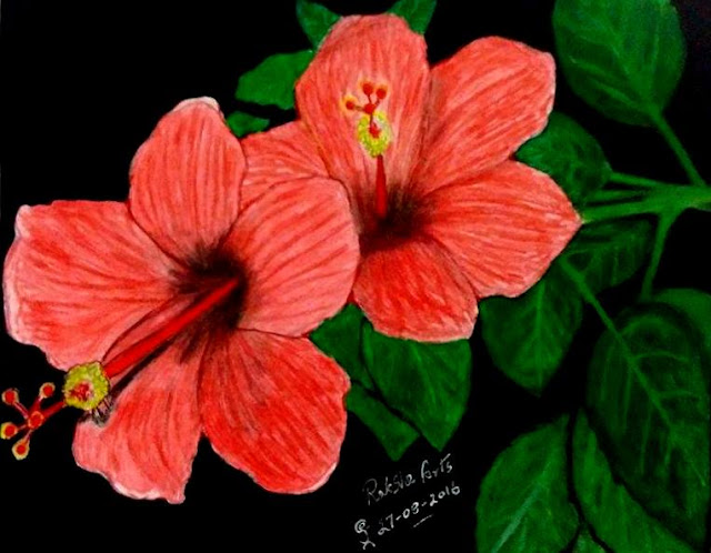 PENCIL DRAWING - HIBISCUS