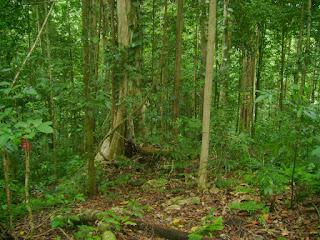 Hutan di Indonesia