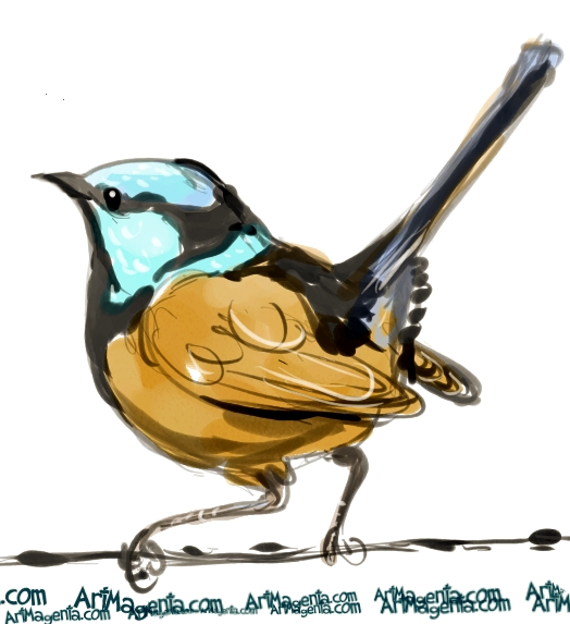 Superb Fairywren  sketch painting. Bird art drawing by illustrator Artmagenta