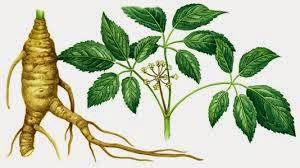obat herbal tbc