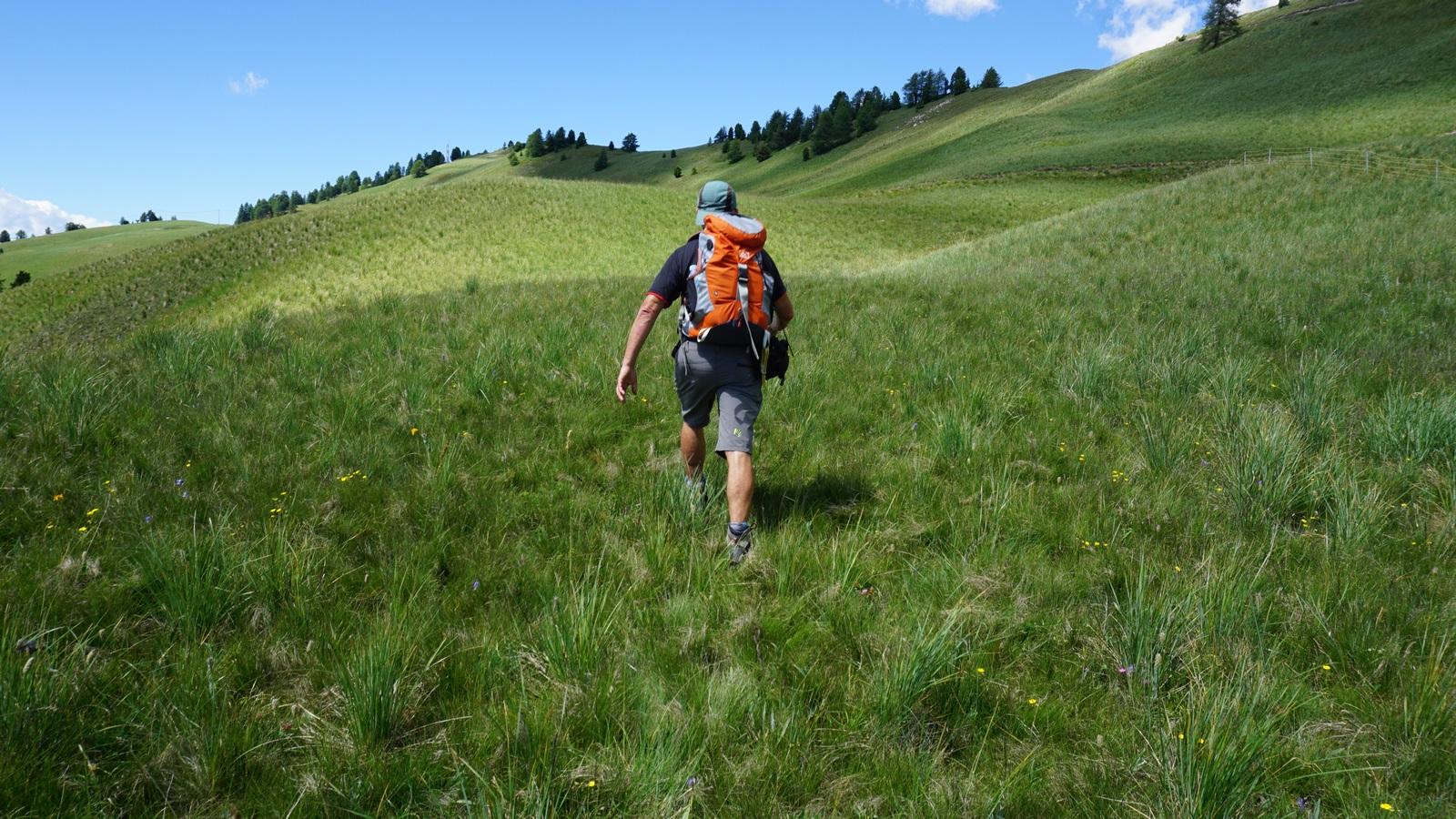 Heading to Peynier summit along alpine meadow