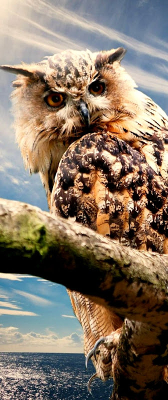 owl nature sky clouds outlook free hd wallpaper Animals