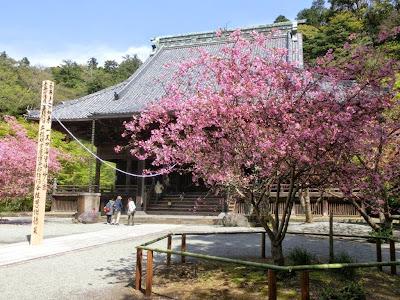 妙本寺のカイドウ