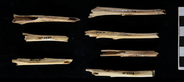 Archaic Homo populations in the northwestern Mediterranean hunted small fast game