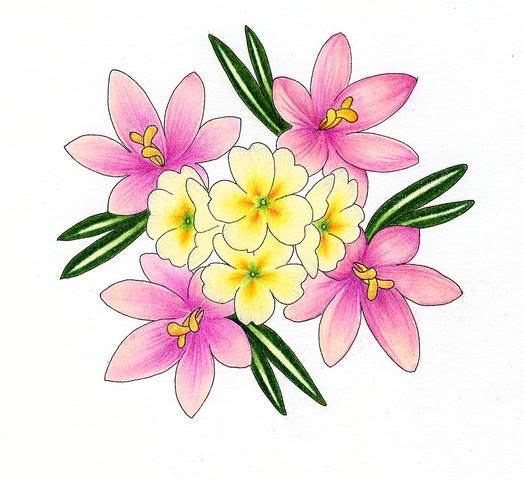 flowers for flower lovers.: flowers drawing.