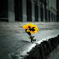 Como posso manter a minha esperança no meio da adversidade?