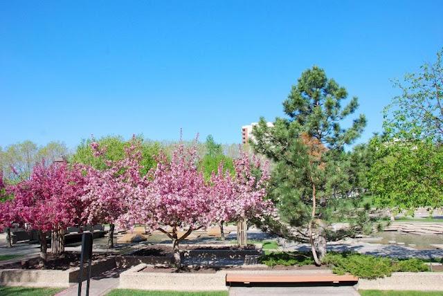 Primavera em Edmonton