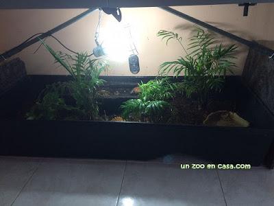 Terrario abierto de 150 cm